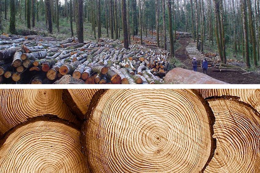 Madera timber docomop - Maderas el pino ...